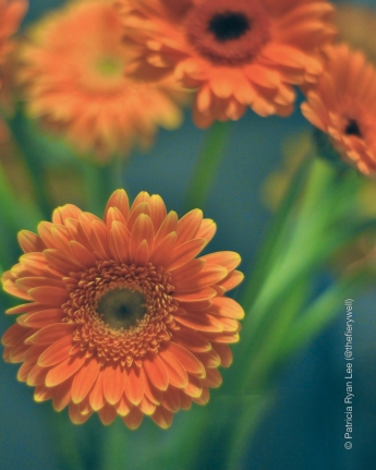 Gerber daisies - my first batch of fresh flowers for 2014.